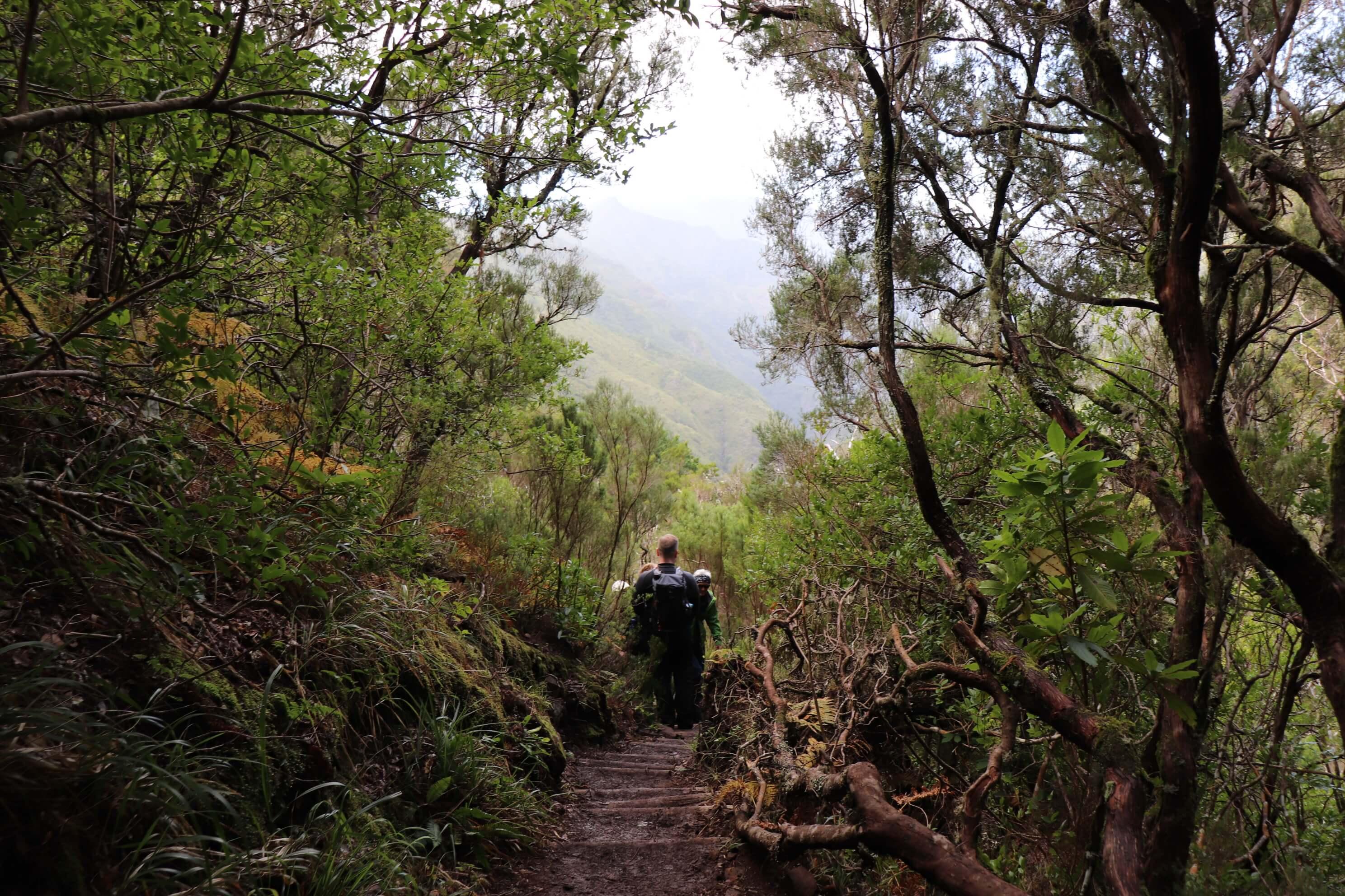 Levada Rabaçal Madeira