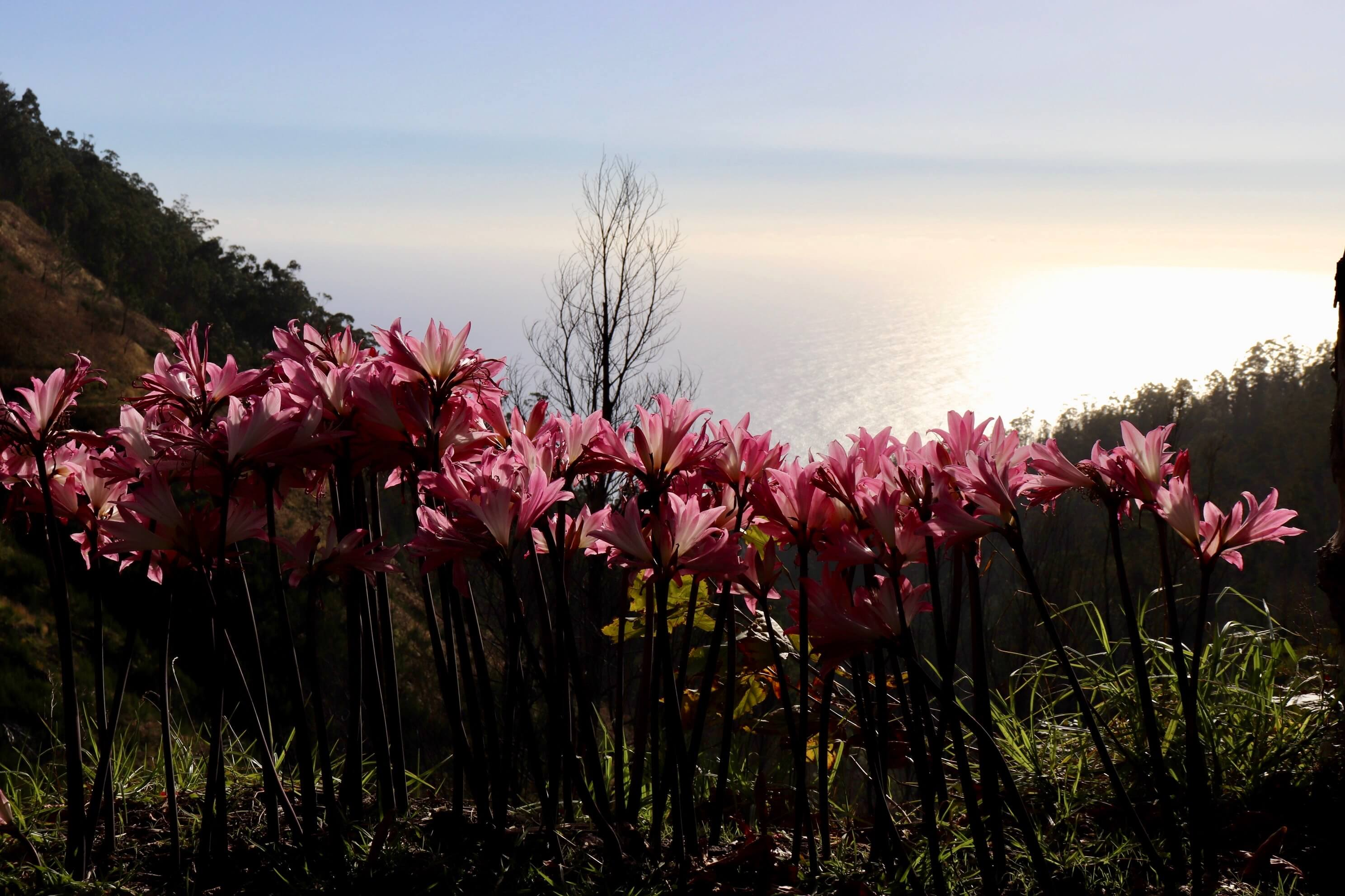 Flowers in Madeira